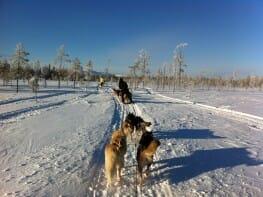 Finland husky sledding Lapland Finalnd