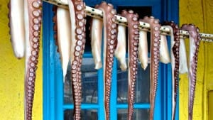 Pic of the Week: Octopus in Lesvos, Greece
