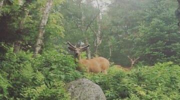 photo, image, deer, mont tremblant