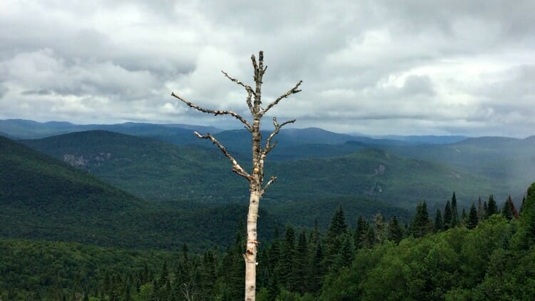 photo, image, tree, tremblant