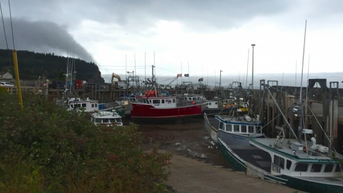 Harbour in Alma Kelly's Backshop Tides Restaurant Blessing of Boats