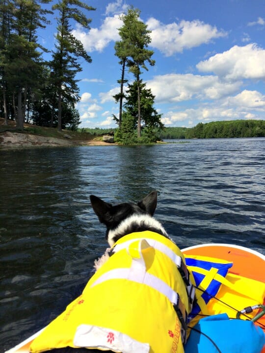 photo, image, dog on paddle board, solo camping trip