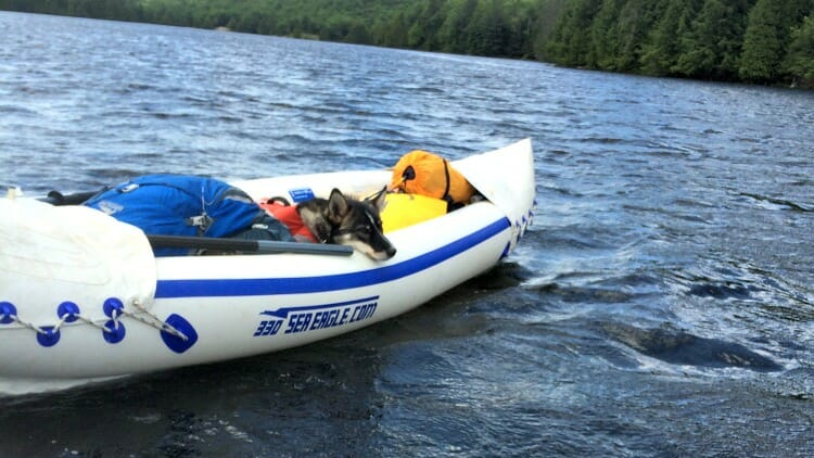 photo, image, dog in kayak, solo camping trip