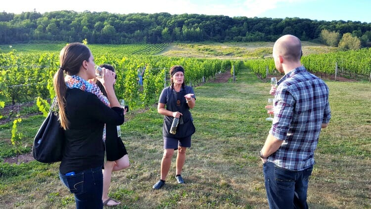 photo, image, vineyard, gaspereau vineyards, wolfville, nova scotia