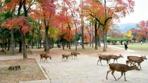 Solo Travel Destination: Nara, Japan
