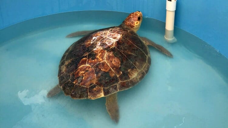 photo, image, turtle hospital, the florida keys