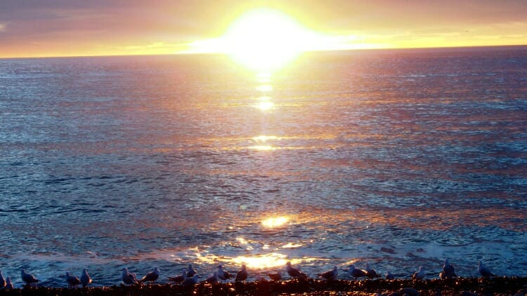 photo, image, beach, kaikoura, new zealand