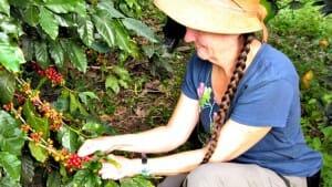 Solo Travel Destination: Coffee and Cacao in Cusco, Peru