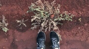 photo, image, feet, red soil, australia, transformed on the ghan