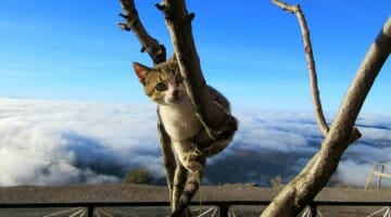 photo, image, cat in tree, tizi-n-test pass, morocco