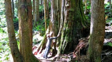 photo, image, traveler, avatar grove, port renfrew