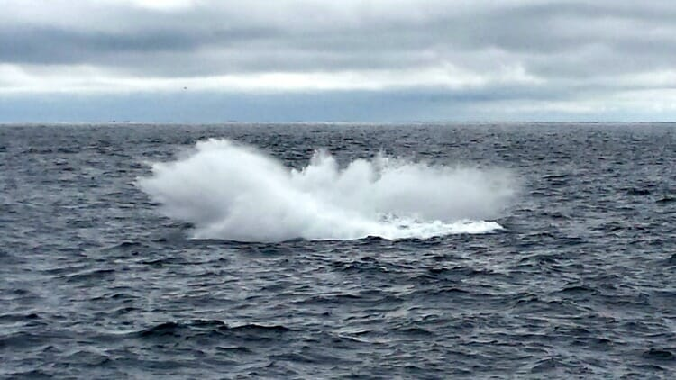 photo, image, whale splash, solo in newfoundland
