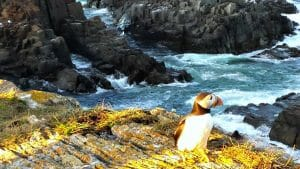 Puffins, Whales, and Screech: Solo in Newfoundland