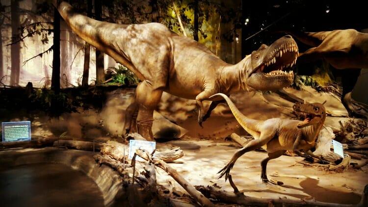photo, image, royal tyrrell museum, dinosaur, canadian badlands
