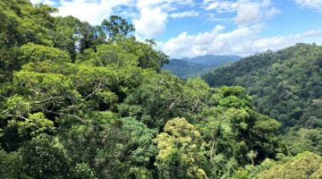 photo, image, rainforest, brunei
