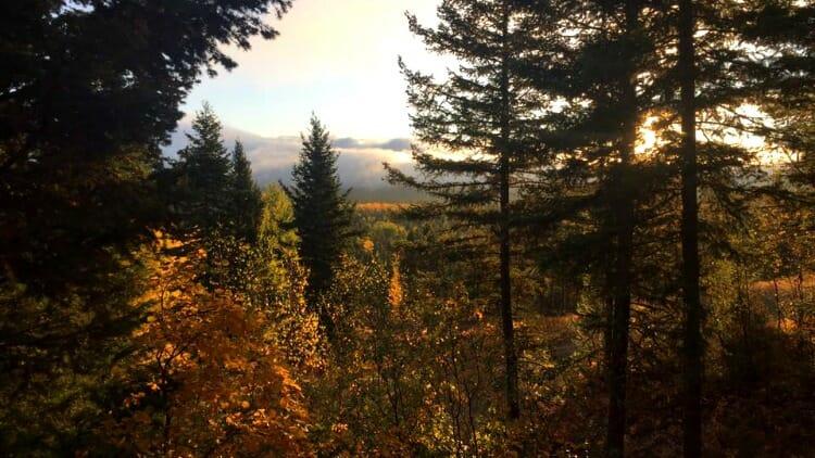 photo, image, trees, western canada photos, 100 mile house