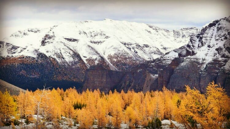 photo, image, larch valley, western canada photos
