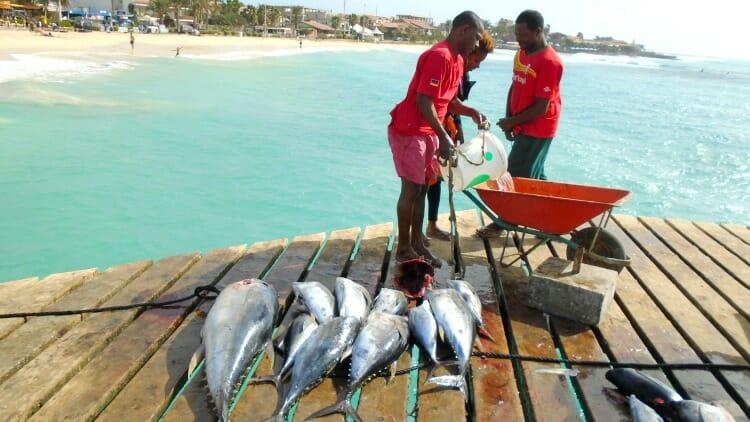 photo, image, fishermen, santa maria harbour, sal island