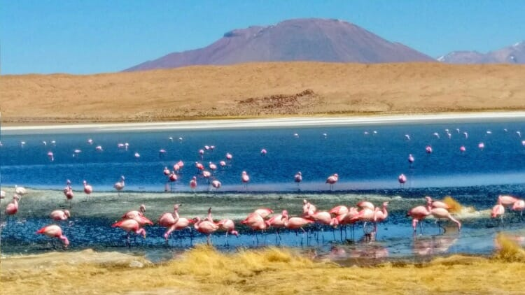 photo, image, flamingos, salar de uyuni, bolivia