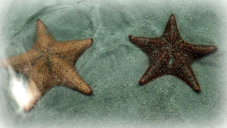 photo, image, starfish, playa estrella, bocas del toro