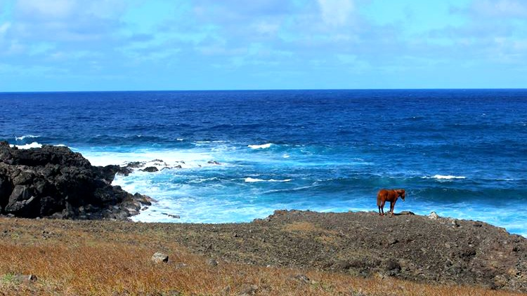 photo, image, horse, easter island coast