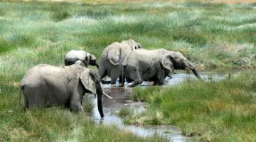 Pic of the Week: Elephants in Tanzania