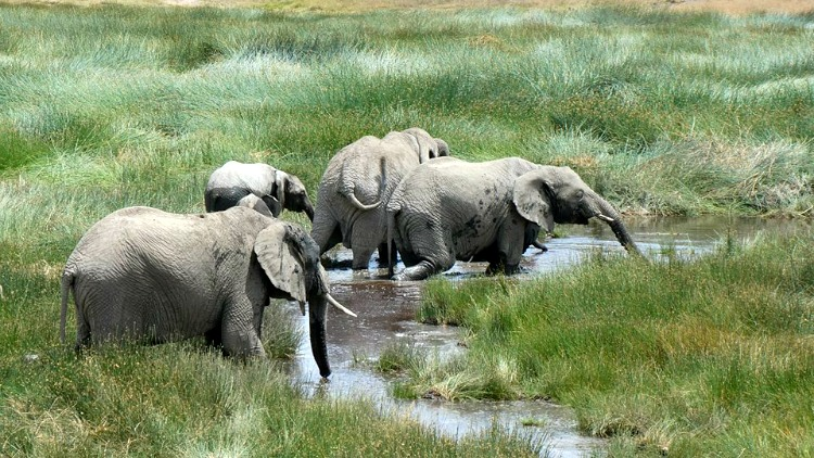 photo, image, elephants in tanzania