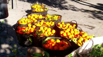 photo, image, fresh oranges, seville, andalucia