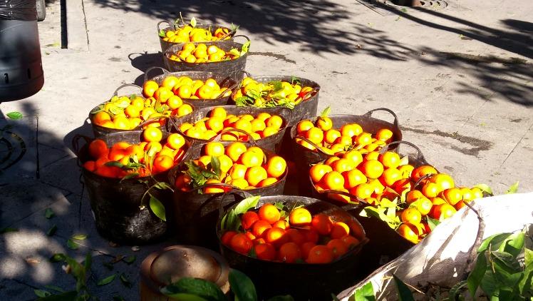 photo, image, fresh oranges, seville, andalucia