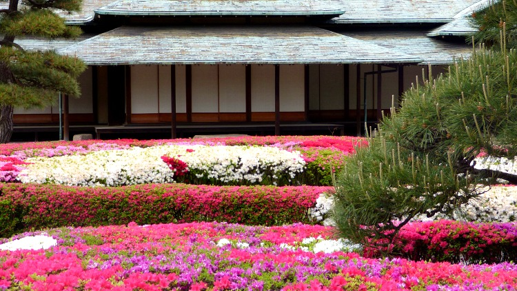 photo, image, flowers, imperial palace gardens, japan
