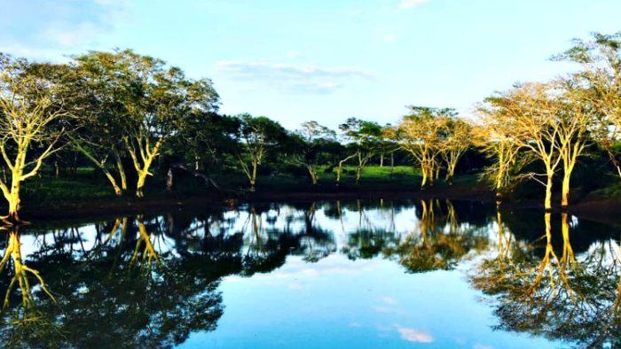 zulu nyala game reserve, south africa photos