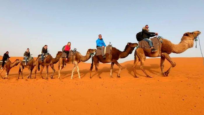 camels, sahara desert, morocco photos