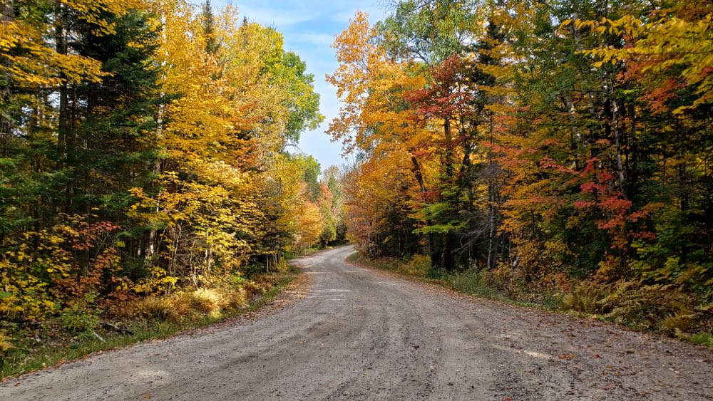 Fall colors on country road